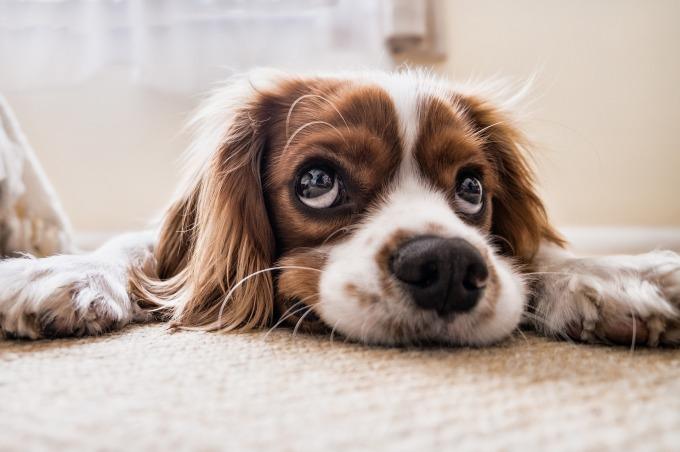 Pets happen. Atwork?